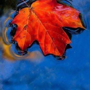 «Осенний мотив»